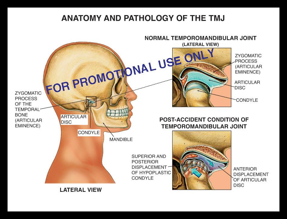 Eye anatomy, cornea, conjunctiva, iris, lens, retina, vitreous , choriod, sclera, opic nerve, macula vision, sight