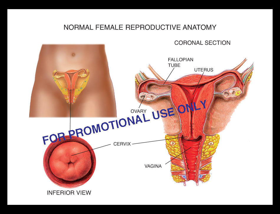"""Normal Female Pelvic Anatomy"""